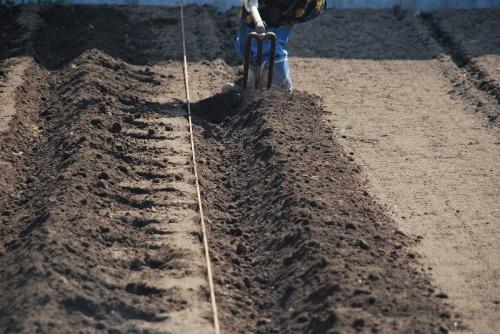 05鋤掘り.jpg