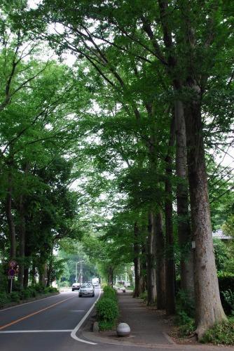 090519_01けやき街道.jpg