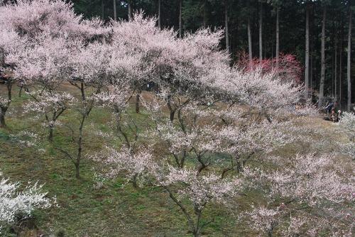 09緑と梅花.jpg